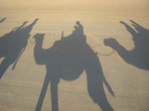 camel shadow